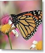 A Beautiful Monarch Metal Print