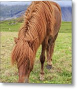 A Beautiful Red Mane On An Icelandic Horse Metal Print