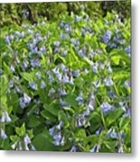 A Bed Of Bluebells Metal Print