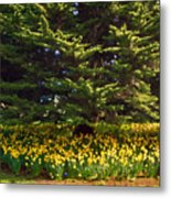 A Bed Of Narcissus Metal Print