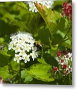 A Bee And A Fly Meet On A Flower Metal Print