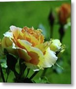 A Benton City Rose  Metal Print