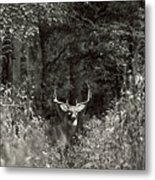 A Big Buck In Rut Metal Print