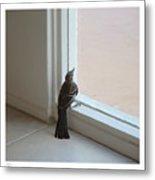 A Bird At A Plate Glass Window Metal Print