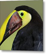 A Bird For His Bill.. Metal Print