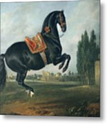 A Black Horse Performing The Courbette Metal Print