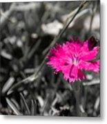 A Bloom Of Color Metal Print