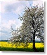 A Blooming Tree In A Rapeseed Field Metal Print