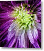 A Bloom's Unfolding Metal Print