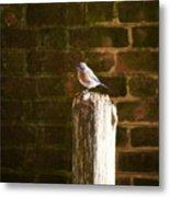 A Bluebird At The Governor's Palace Gardens Metal Print