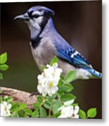 A Bluejay Bouquet Metal Print
