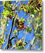 A Branch Standing Out From The Crowd Metal Print