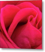A Bright Pink Rose Close-up Metal Print