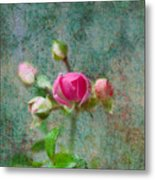 A Bud - A Rose Metal Print