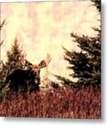 A Bull Moose Dream Metal Print
