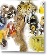 A Bunch Of Colorful Fish No 05 Metal Print