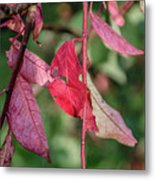 A Bunch Of Red Leaves Metal Print