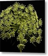A Burst Of Green Metal Print