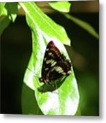 A Butterfly In The Sun  Metal Print