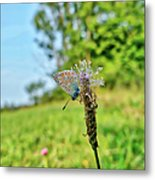 A Butterfly On A Luminous Shining Meadow Metal Print