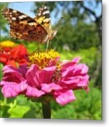 A Butterfly On The Pink Zinnia Metal Print