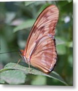 A Butterfly With Closed Wings Metal Print