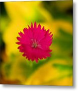 A Button From The Blur Metal Print