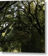 A Canopy Of Trees Metal Print