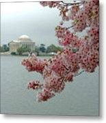 A Capital Cherry Blossom II Metal Print