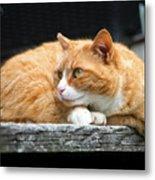 A Cat Named 'kitty' Metal Print