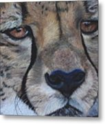 A Cheetah Metal Print
