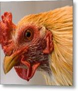A Chicken In Burwell, Nebraska Metal Print