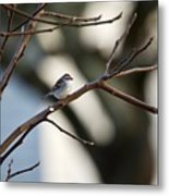 A Chipping Sparrow Metal Print