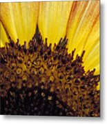A Close-up Detail Of A Sunflower Head Metal Print