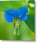A Close-up Of A Bright Blue Flower Metal Print