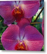 A Close View Of An Exquisite Metal Print