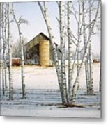A Cluster Of Birch Metal Print