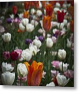A Cluster Of Tulips Metal Print