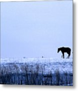 A Cold Winter Metal Print