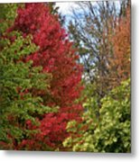 A Collection Of Fall Colours Metal Print