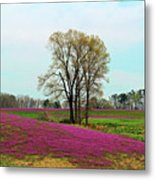 A Colorful Field Metal Print