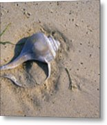 A Conch Shell Lies In The Sand Metal Print