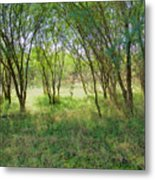 A Country Morning Metal Print
