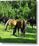 A Couple Of Horses Metal Print