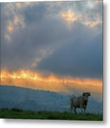 A Cow In The High Prairies  At Sunset Metal Print