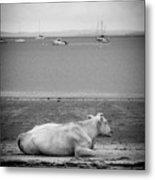 A Cow On The Beach Metal Print