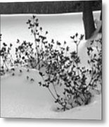 A Creme Brulee Winter Metal Print