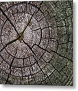 A Cut Above - Patterns Of A Tree Trunk Sliced Across Metal Print