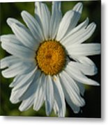 A Daisy A Day Metal Print