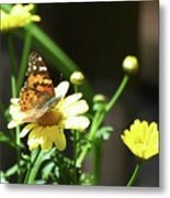 A Day Of Daisies Metal Print